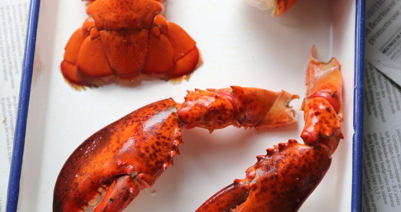 homard-pas-à-pas-étape-1