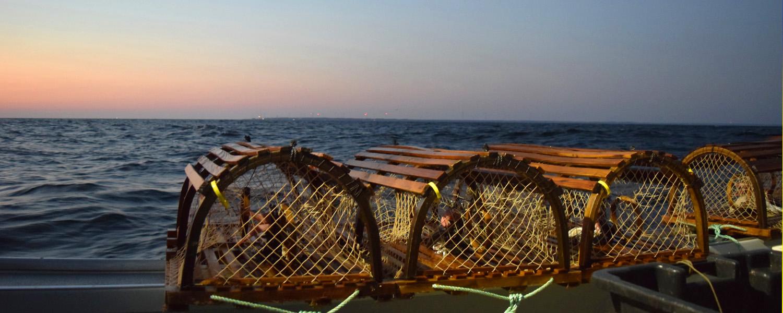 Casiers homard Prince Edouard-2